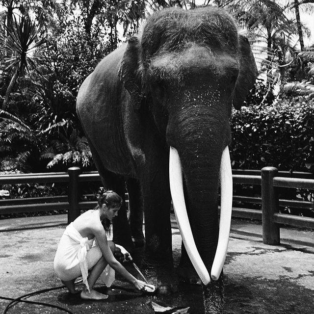 【6upoker】美女全裸骑大象惹议?名模《Alesya Kafelnikova》表示爱自然是天性!